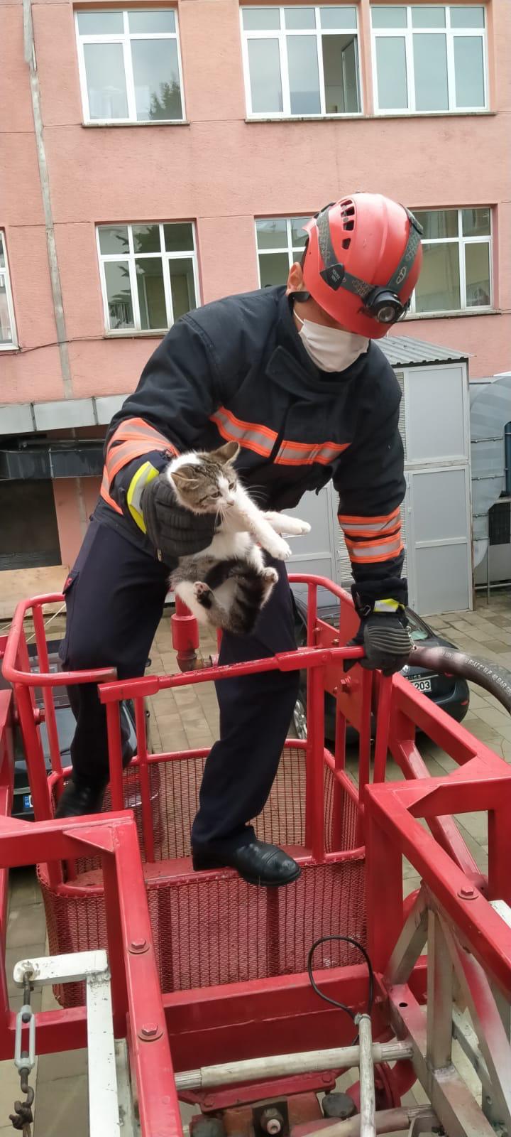 Trabzon'da ağaçta mahsur kalan kediyi itfaiye kurtardı.