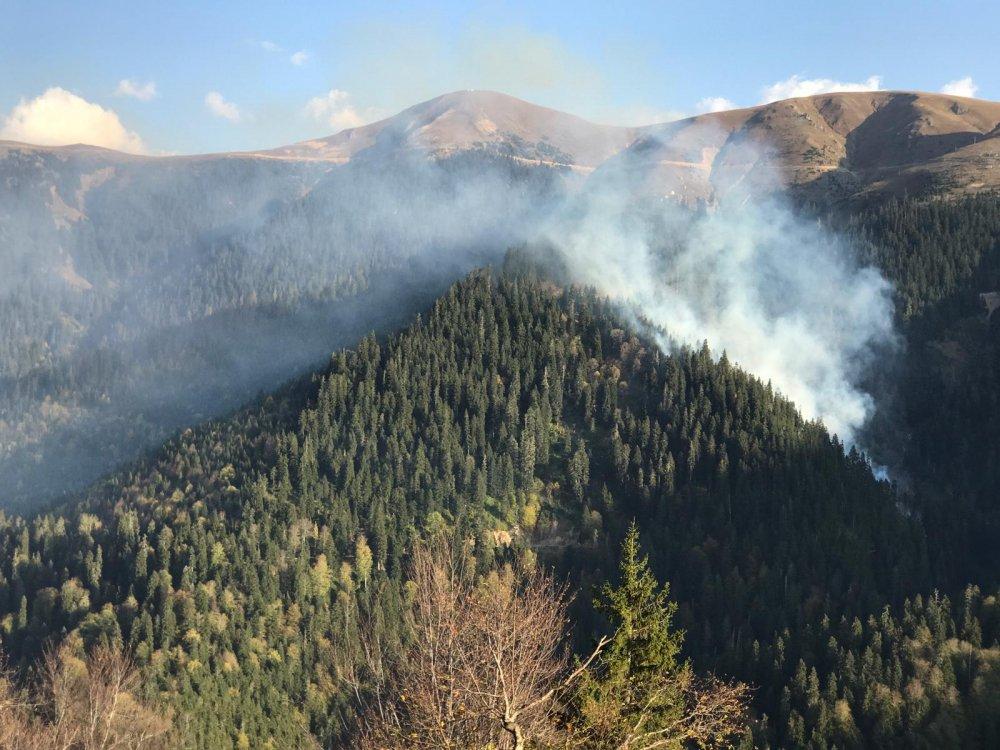 Gümüşhane Örümcek Ormanları'ndaki yangında son durum