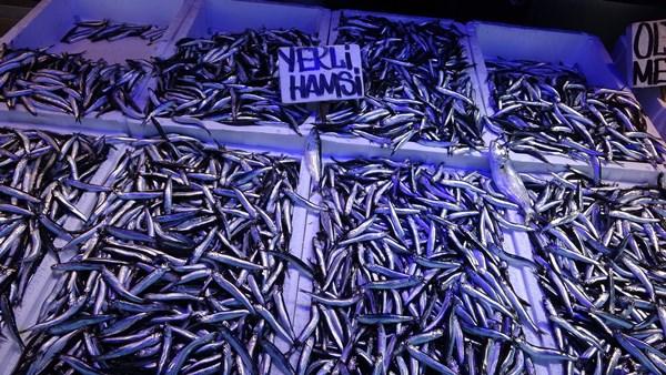 Hamsi avı ihracatı da vurdu