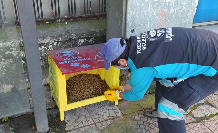 Trabzon'da sokak hayvanları unutulmadı