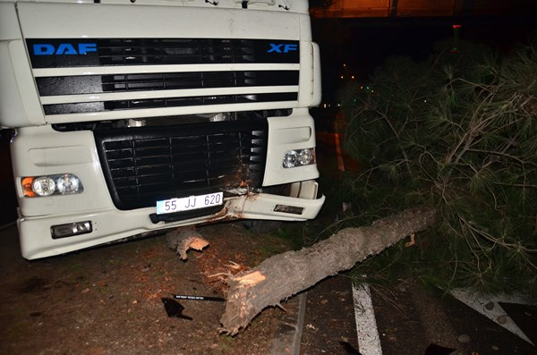 Karadeniz Sahil yolunda kaza! Ağaca çarptı