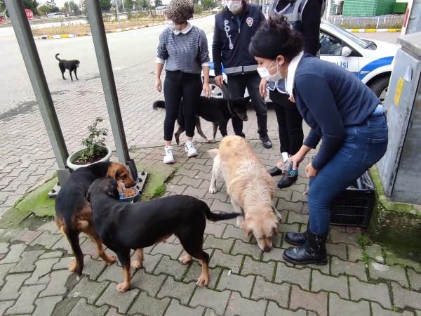 Giresun'da sokak hayvanları sahipsiz kalmadı