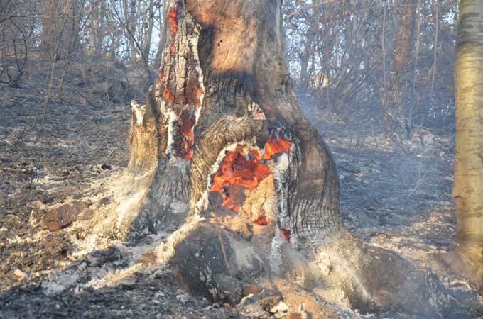 Ordu'da sigara izmariti 20 dönüm alanı yaktı