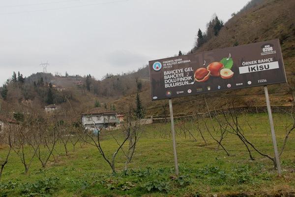 Trabzon'da fındık üreticilerine 20 bin fidan