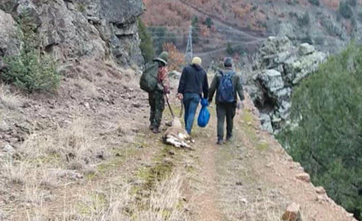 Doğu Karadeniz'de yaban hayatı onlar yüzünden tehlikede