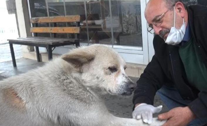 Patisini tedavi ettiği köpek her gün pansumana geliyor