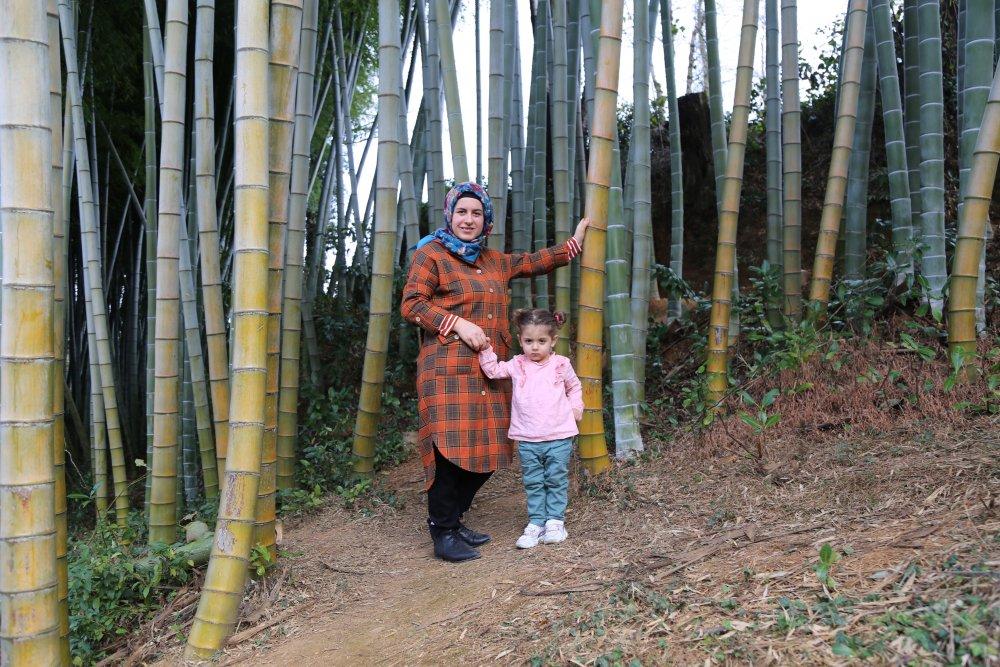 Evinin bahçesine diktiği bambu ilgi odağı oldu