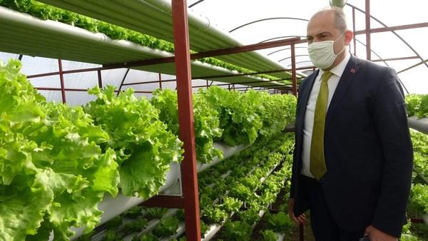 Trabzon'da pandemide köye dönüş tarımı hareketlendirdi