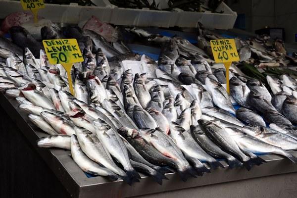Karadeniz ısındı, balıkların boy ve göç yolları değişti