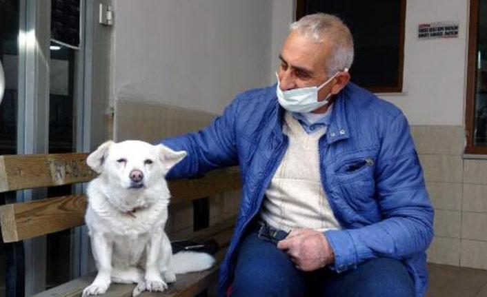 Trabzon'da hastane kapısında sahibini bekleyen köpek şimdi de Japonya gündeminde!