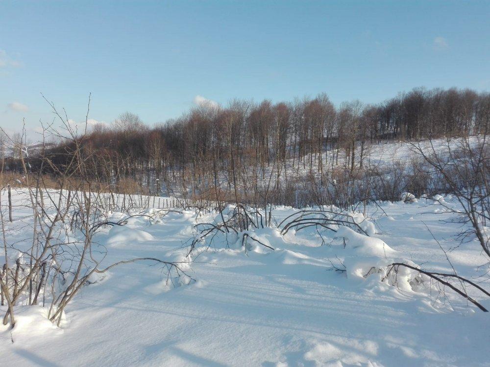 Kar yağışı, fındık dallarının belini büktü