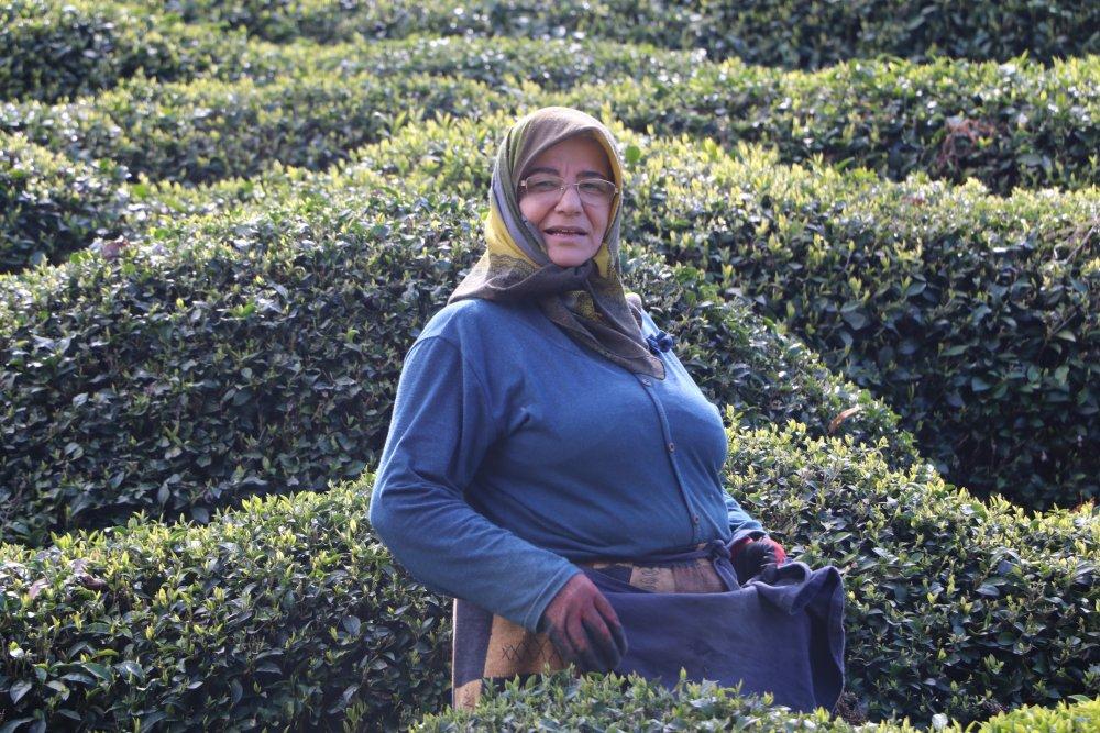 Rize'de çay bahçelerinde hasat hazırlığı