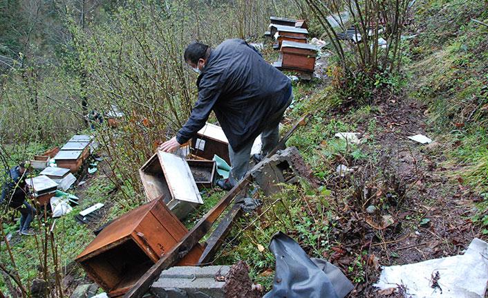 Köye gelen ayı 30 arı kovanını parçaladı!