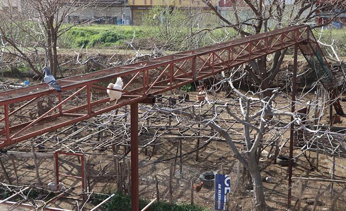 Karadeniz usulü çözüm: Tavuklarına üst geçit yaptı