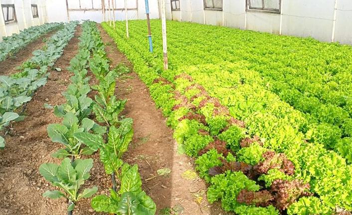 Ordu'da organik üretim 19 kat arttı