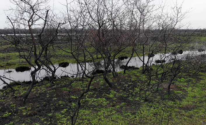 Doğa kendini yeniledi, Kızılırmak Deltası yeşillendi