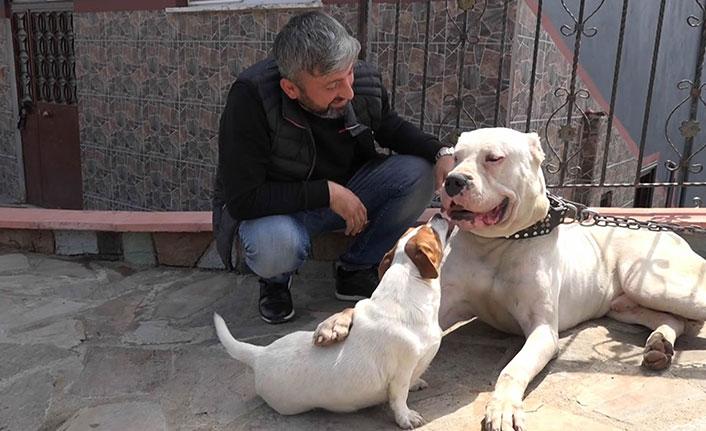 Yargı mücadelesini kazandı, iki ay sonra köpeklerine kavuştu