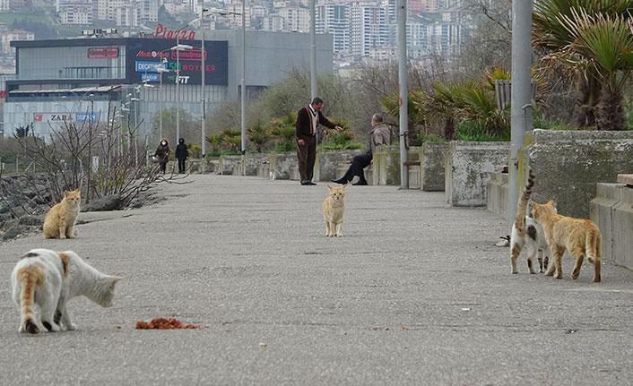 Samsun'un kedili sahili ilgi çekiyor