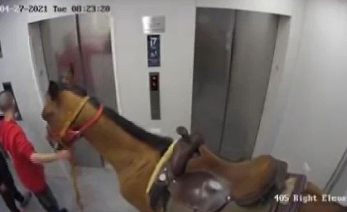 Asansöre at bindirmeye çalışan adamdan ilginç savunma