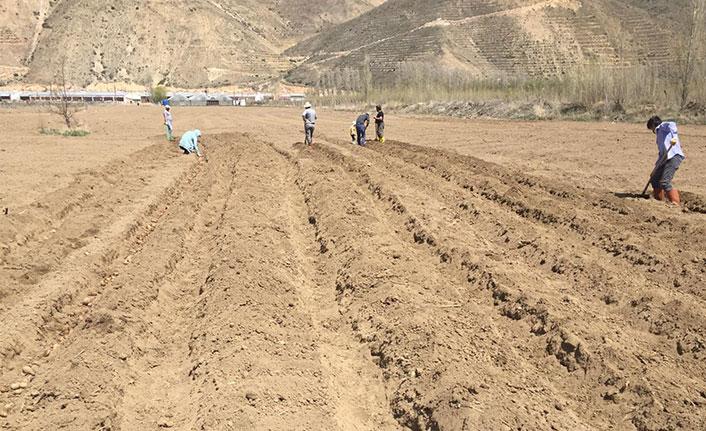 Bayburt Üniversitesinde patates ekimine başlandı