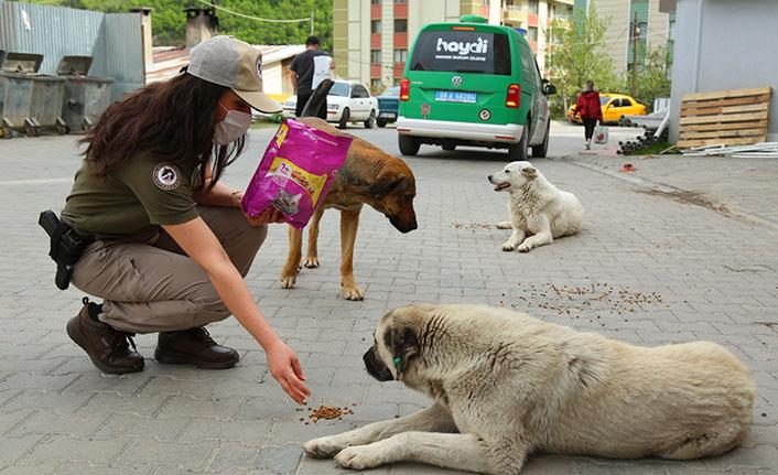 Artvin'de sokak hayvanlarına polis el uzattı