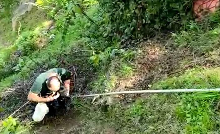 Rize'de uçuruma düşen köpeği köylüler kurtardı