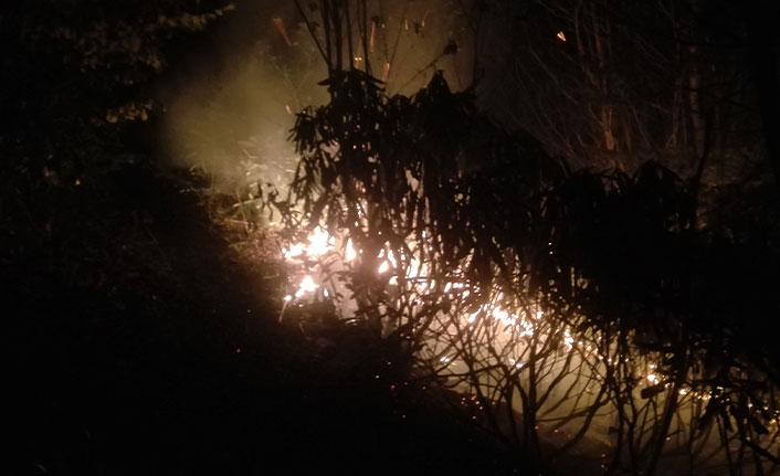 Ordu'da ormanlık alandaki yangın