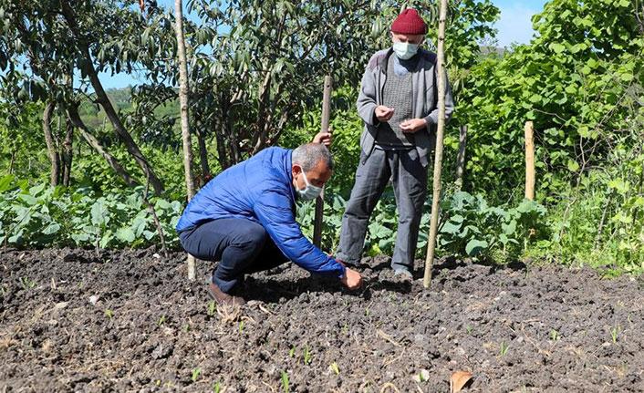 Vali tarlaya indi: Tohum ekti, ilaçlama yaptı