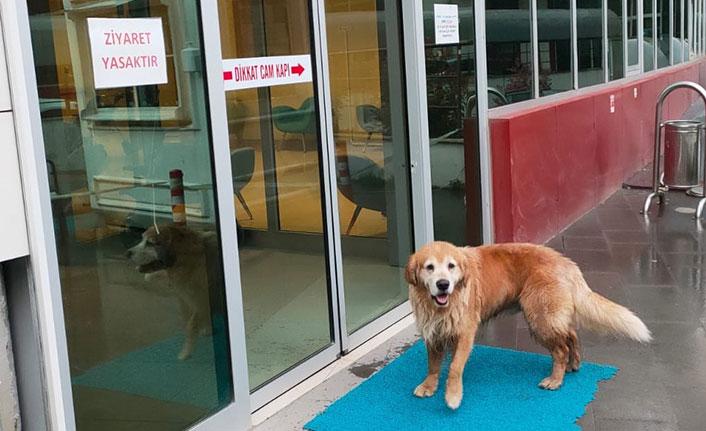 Can dostu köpek hastane önünde sahibini bekledi
