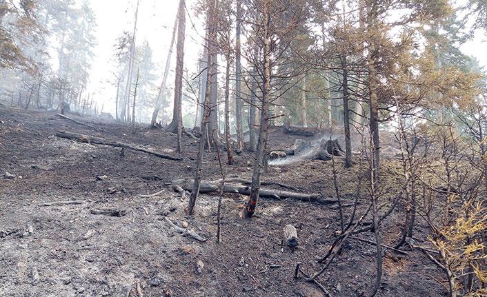 Artvin'deki orman yangını