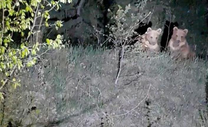 Yavru ayılar bahçelere indi