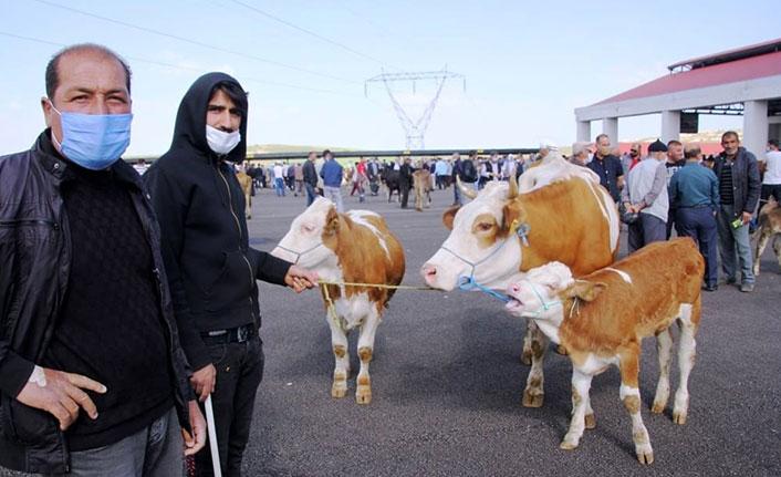 Bayburt'ta canlı hayvan pazarı yeniden açıldı