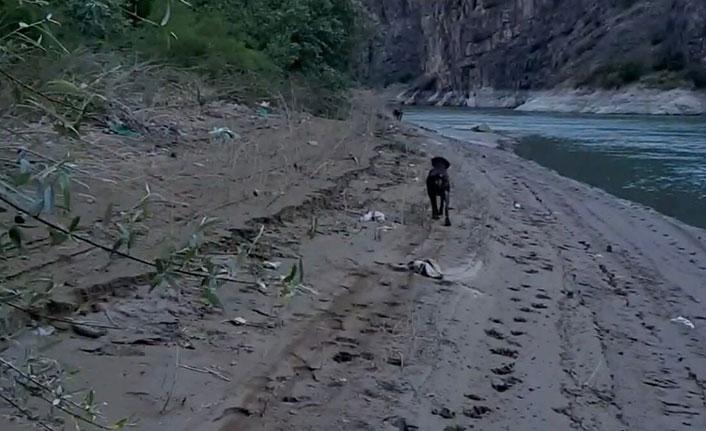 Ayı saldırısından köpeği sayesinde kurtuldu