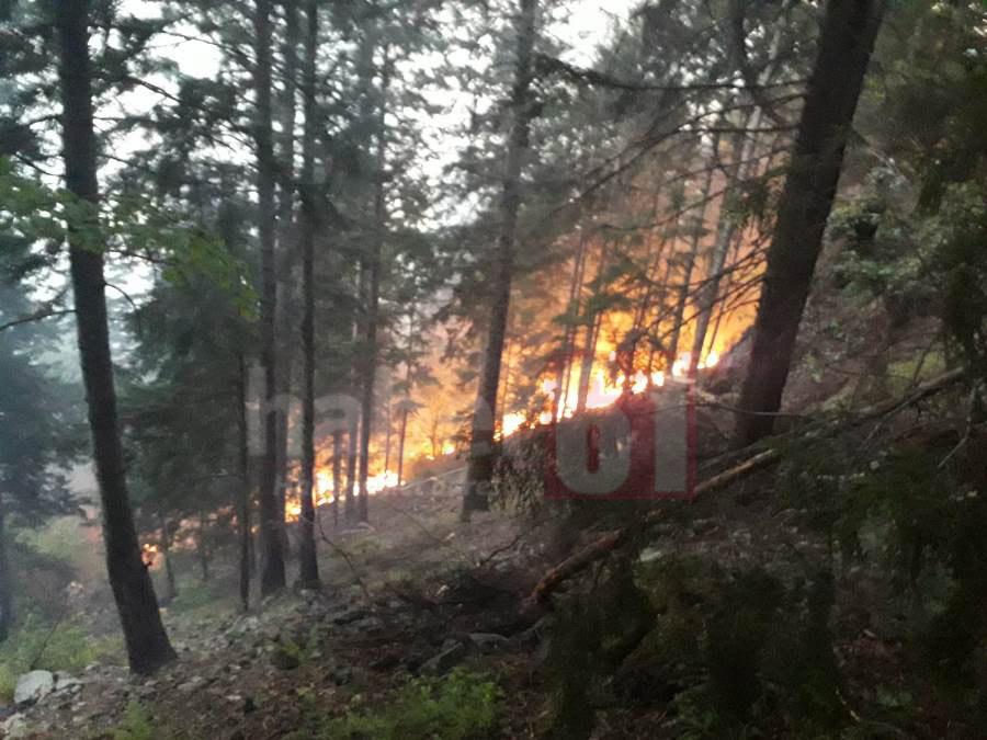 Trabzon'da orman yangını! Müdahale sürüyor