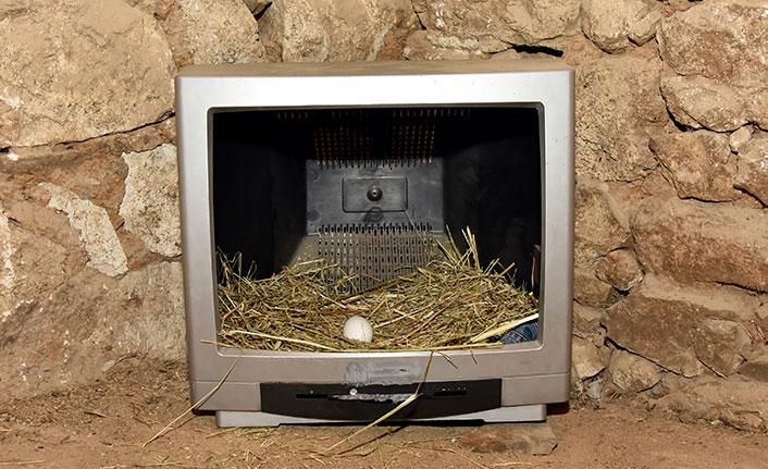 Eski televizyonlardan tavuklara folluk yaptı