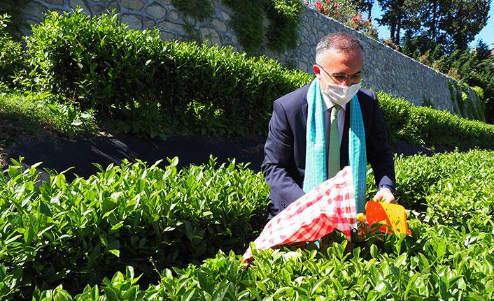 Rize'de protokol çay hasadı yaptı