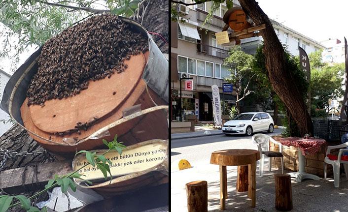 Rize'yi İstanbul'a taşıdı, sokak ortasına arı kovanı kurdu