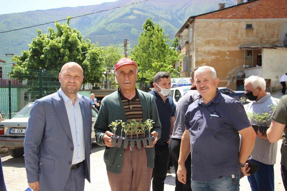 Artvin'de ata tohumu 85 fide dağıtıldı