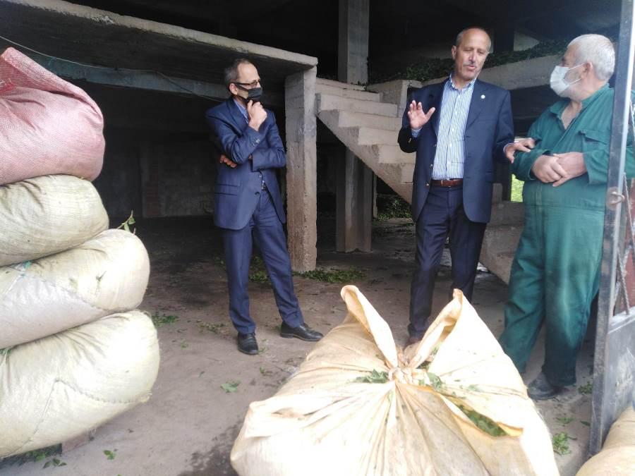 "Azmi Kuvvetli: ""Çay üreticisi mağdur, çay sezonu sancılı başladı"""
