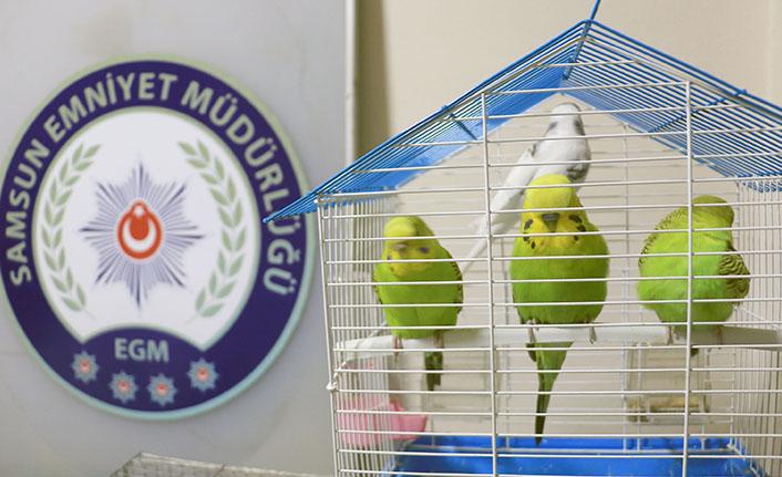 Samsun'un kuş hırsızı yakalandı