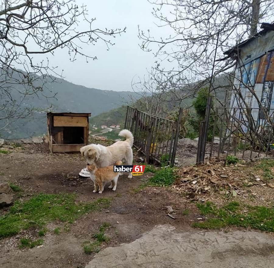 Trabzon'da ilginç görüntü! Kedi ile köpek aynı kulübede yaşıyor