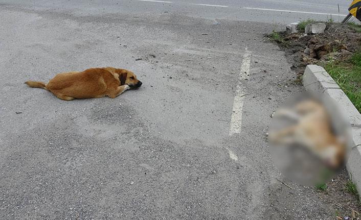 Köpekten büyük vefa örneği