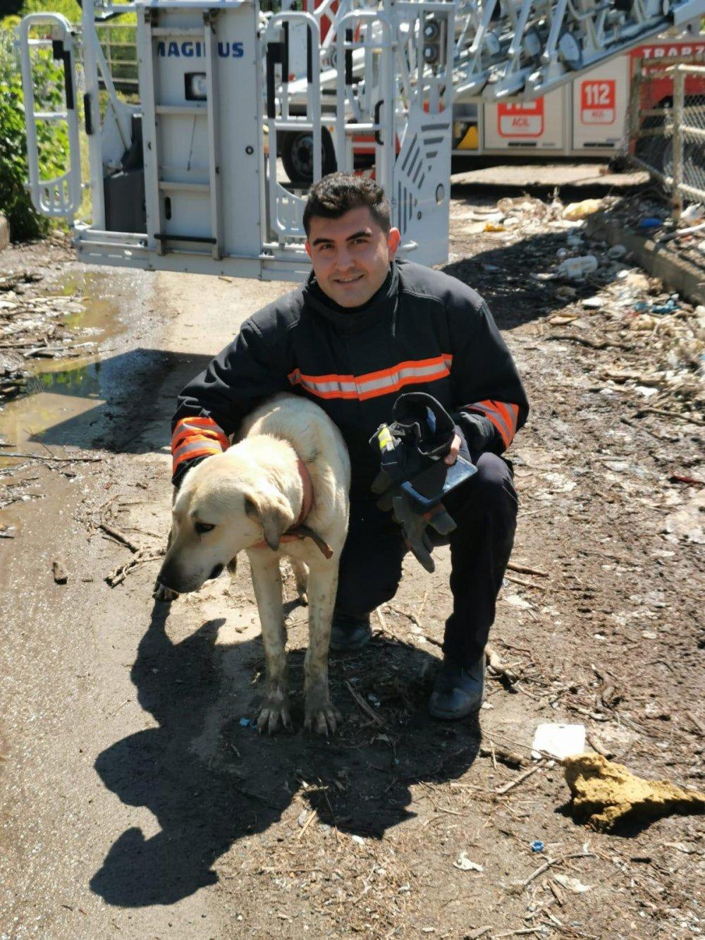 Trabzon'da itfaiyeden köpek kurtarma operasyonu