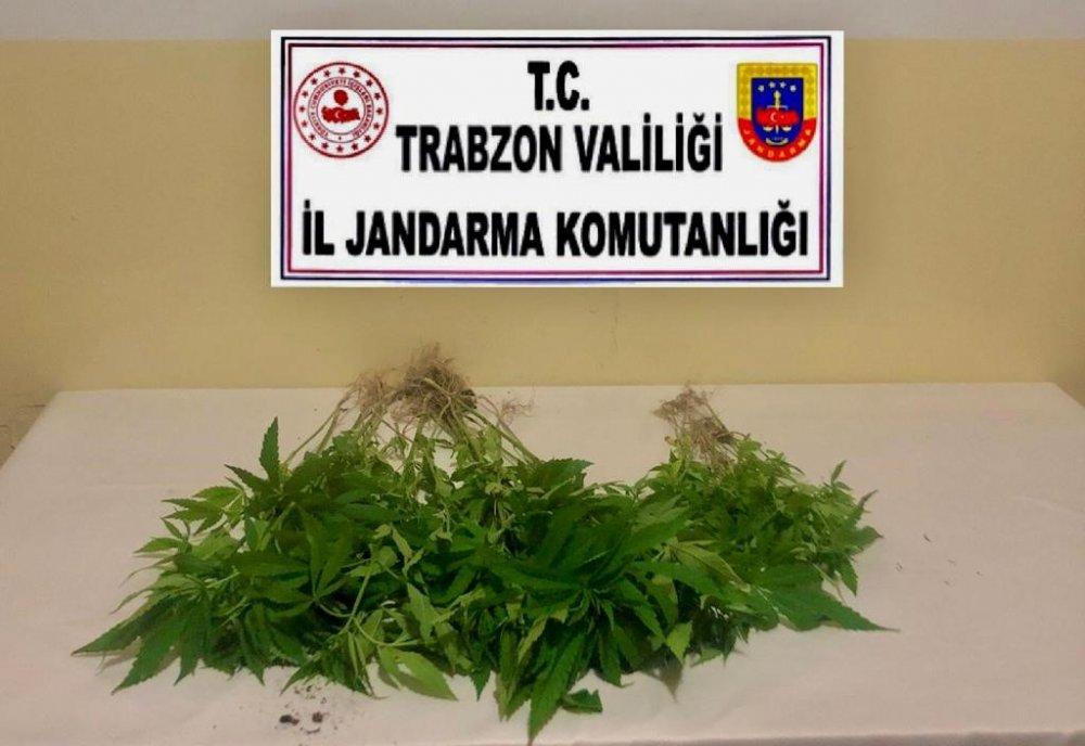 Trabzon'da Hint keneviri yakalandı