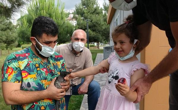 Trabzon'da karganın vefası