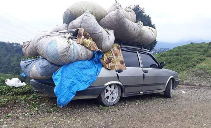 Doğu Karadeniz'de 'çay arabaları' ilginç görüntüler oluşturdu