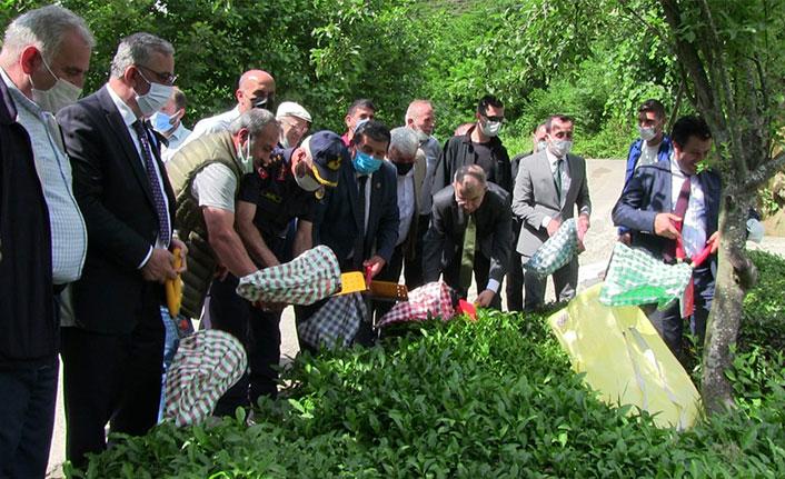 Vali Doruk bahçeye girdi, çay topladı
