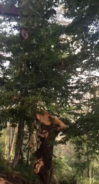 Orman işçilerinin zorlu mücadelesi