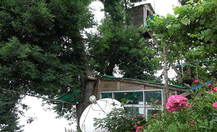 Ağaçtan düştü, iyileşince düştüğü ağaca ev yaptı