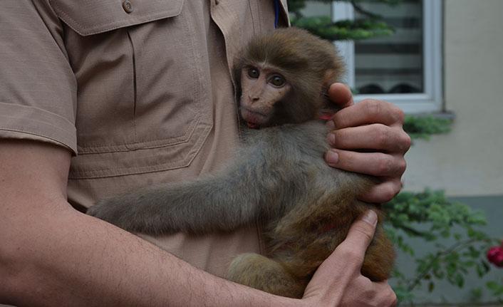 Sokakta bulunan evcil maymun koruma altına alındı